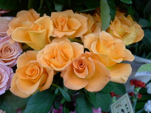 たからゆき生花店4バラ2